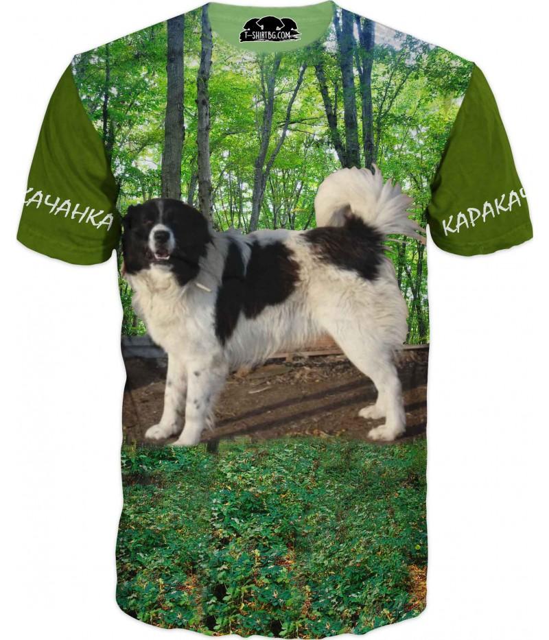 Куче каракачанка в гора